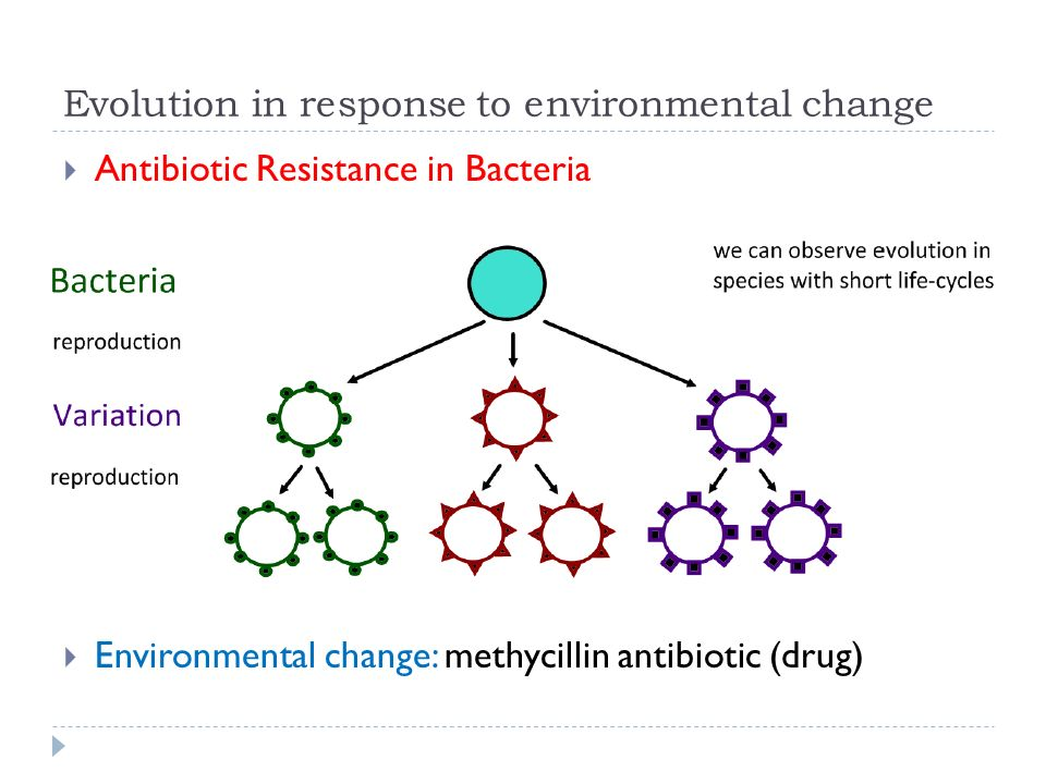 Biology: A summary on Evolution and Antibiotic Resistance