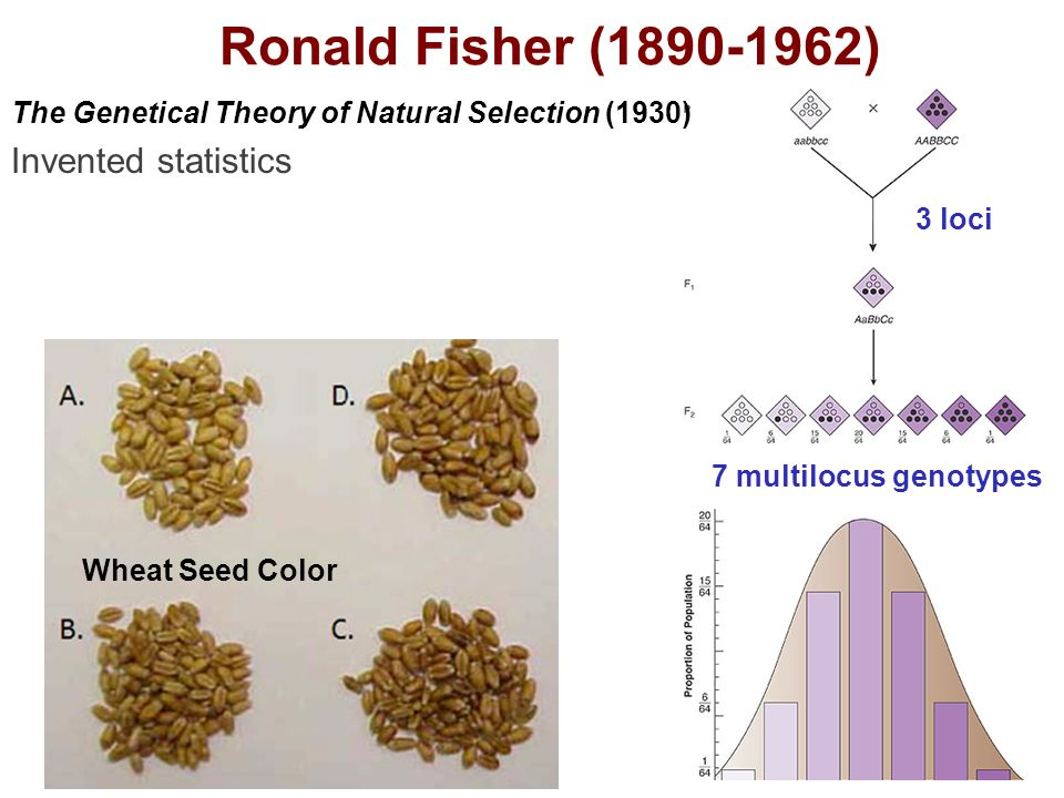 The Genetical Theory Of Natural Selection Ronald Fisher