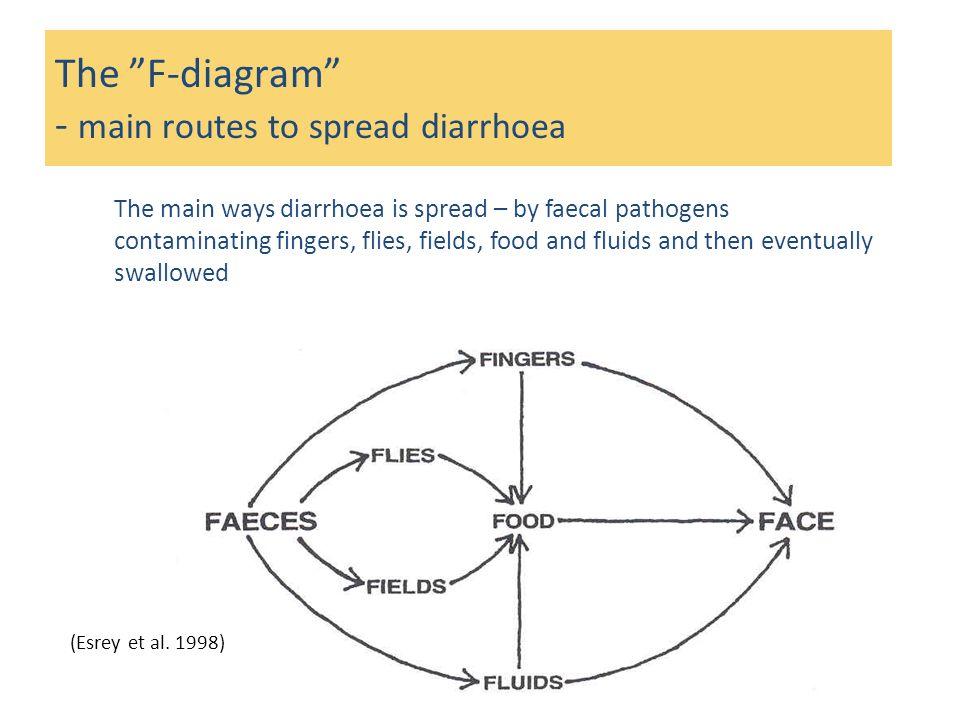 The F-diagram - main routes to spread diarrhoea