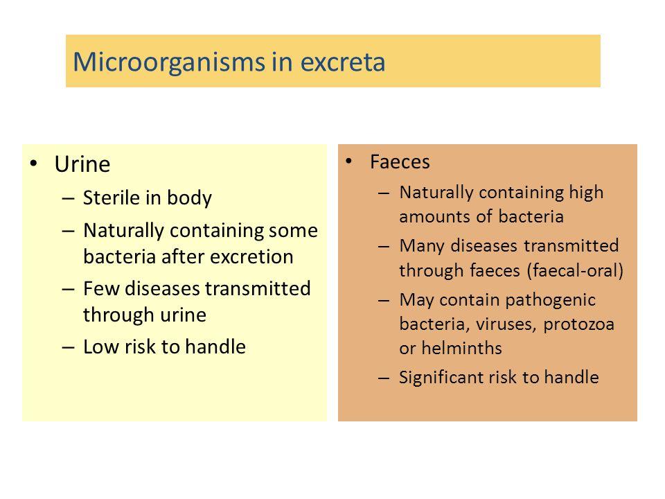 Features of excreta - hygiene