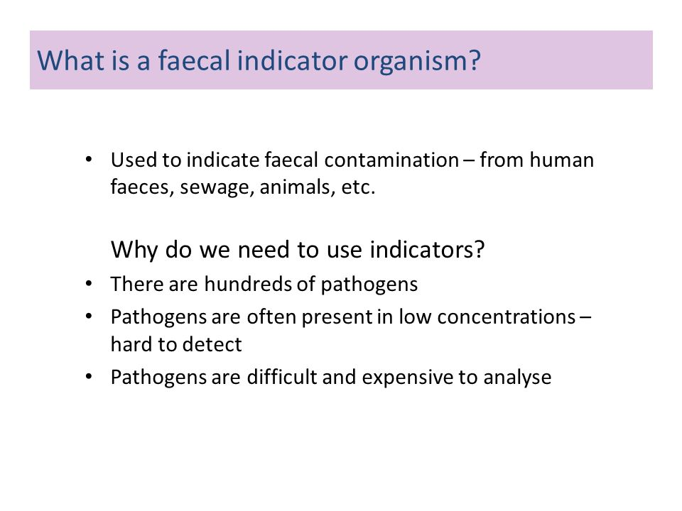 What is a faecal indicator organism
