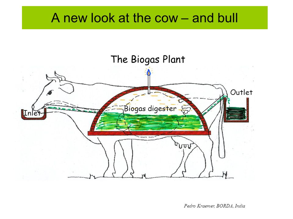 A new look at the cow – and bull