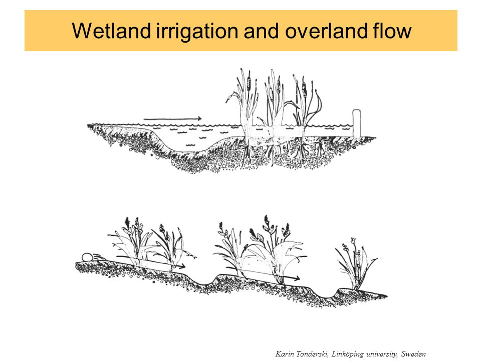 Wetland irrigation and overland flow