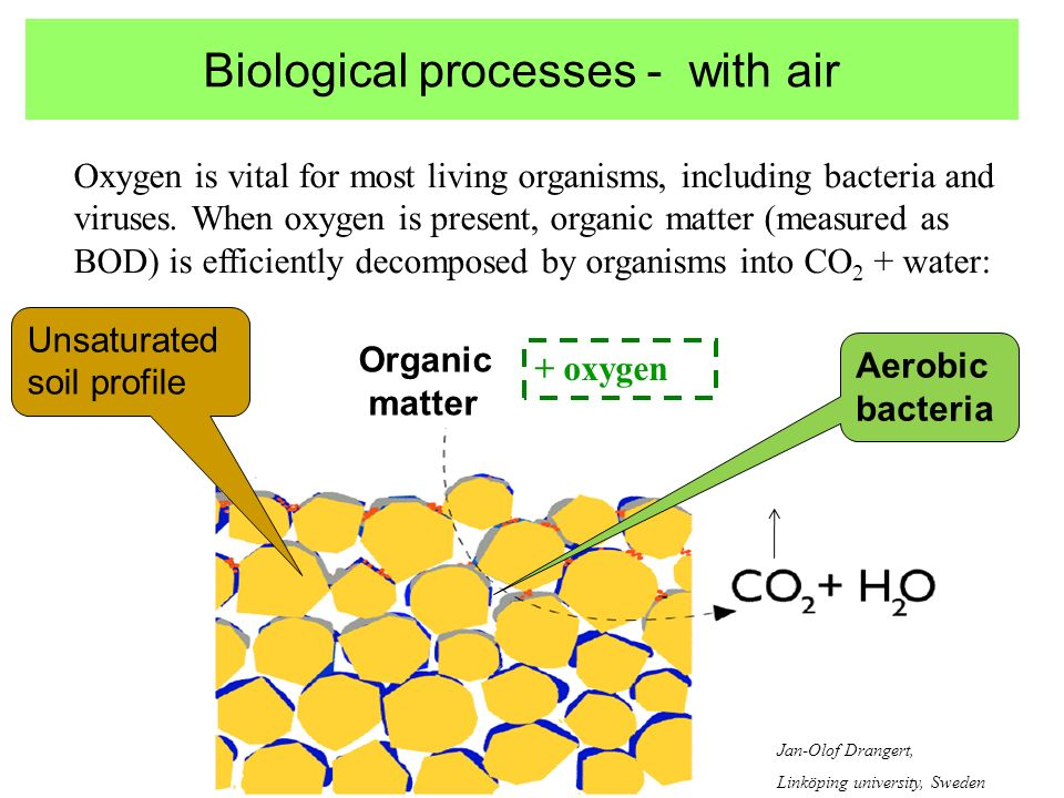 Biological processes - with air