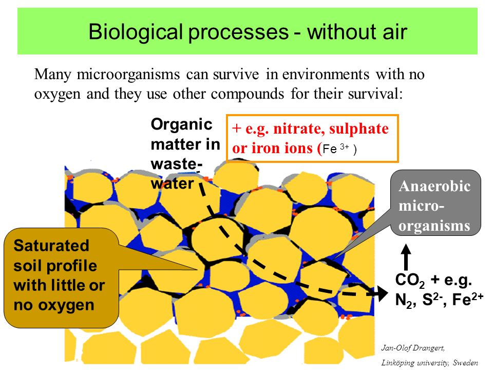 Biological processes - without air