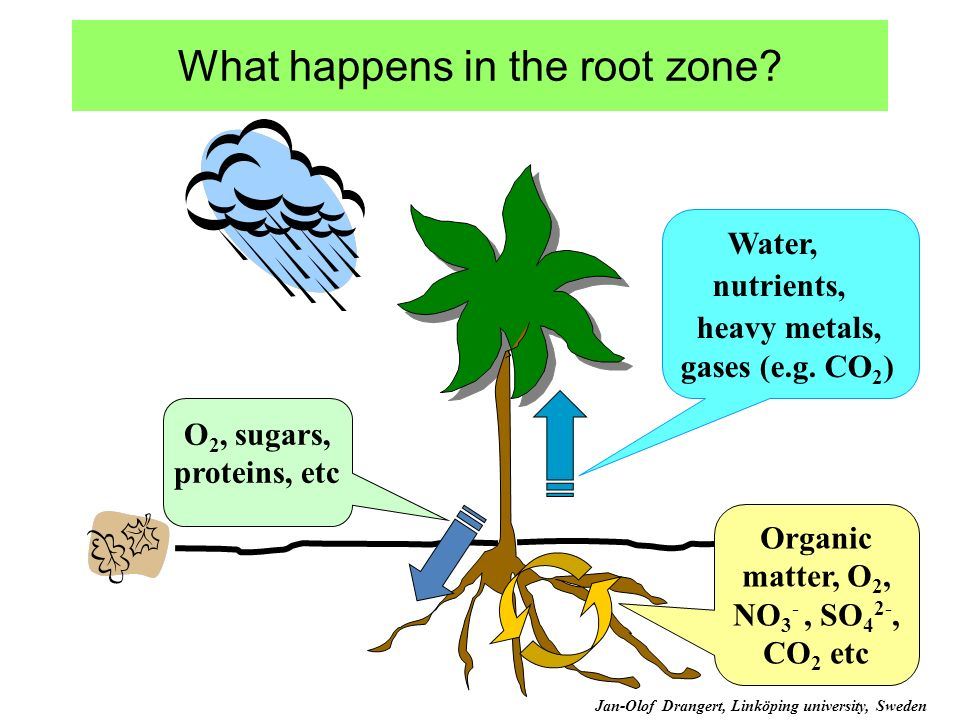 What happens in the root zone