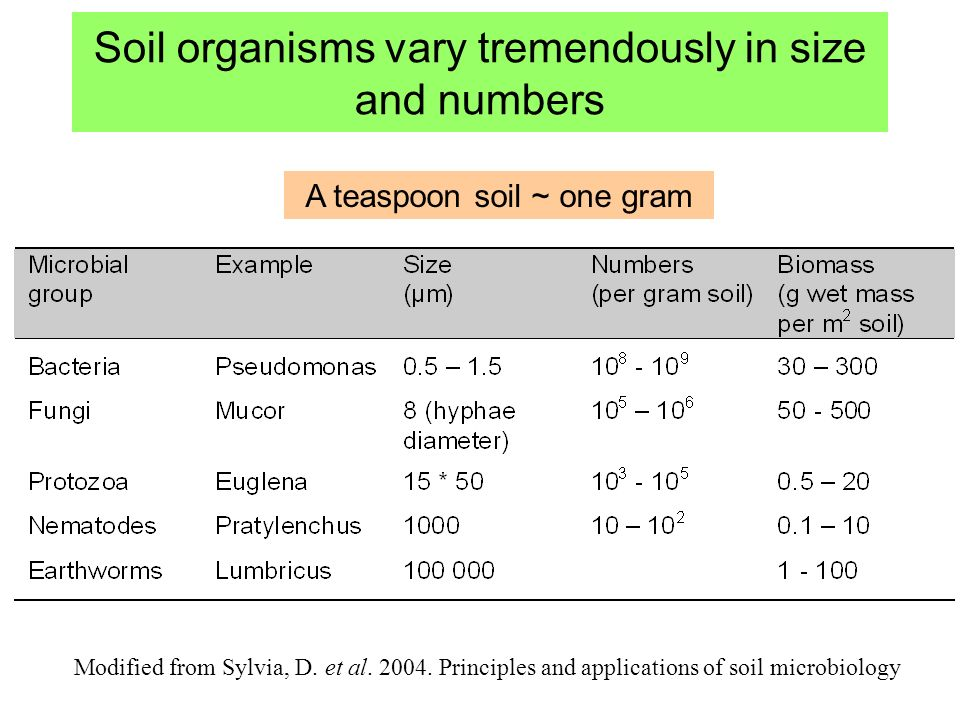 Soil organisms vary tremendously in size and numbers