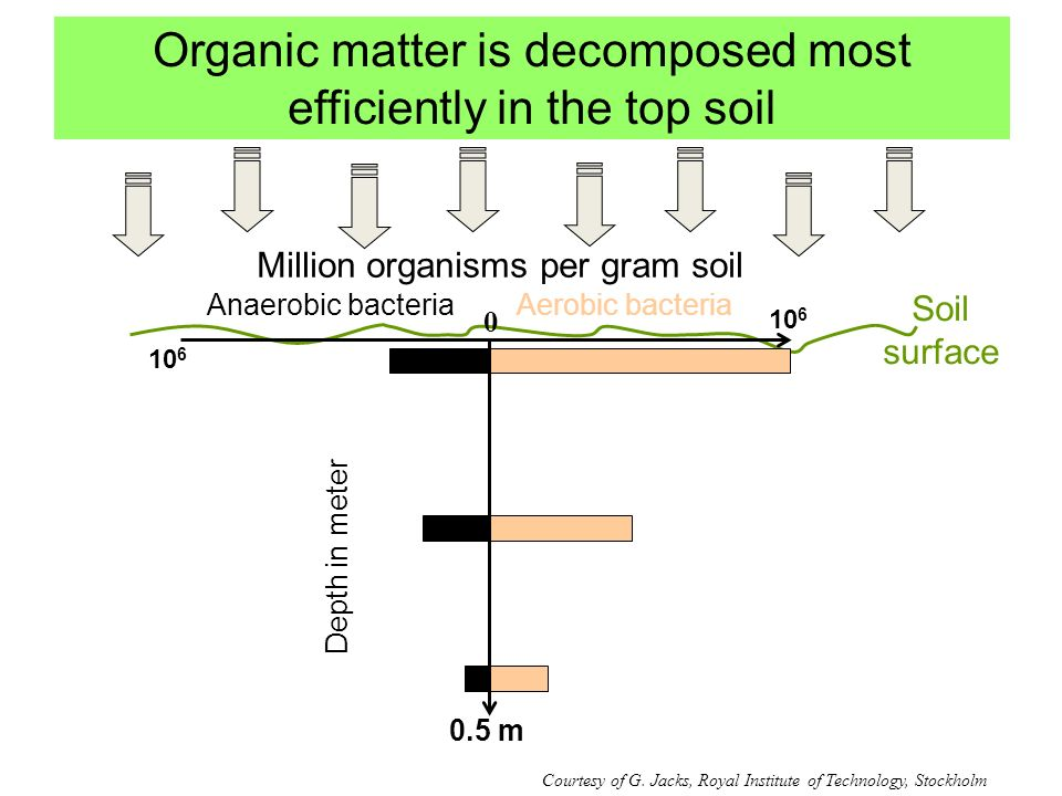 Organic matter is decomposed most efficiently in the top soil