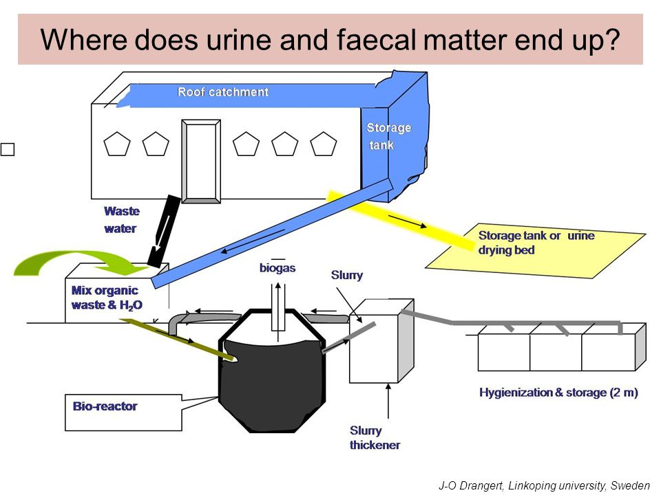 Where does urine and faecal matter end up