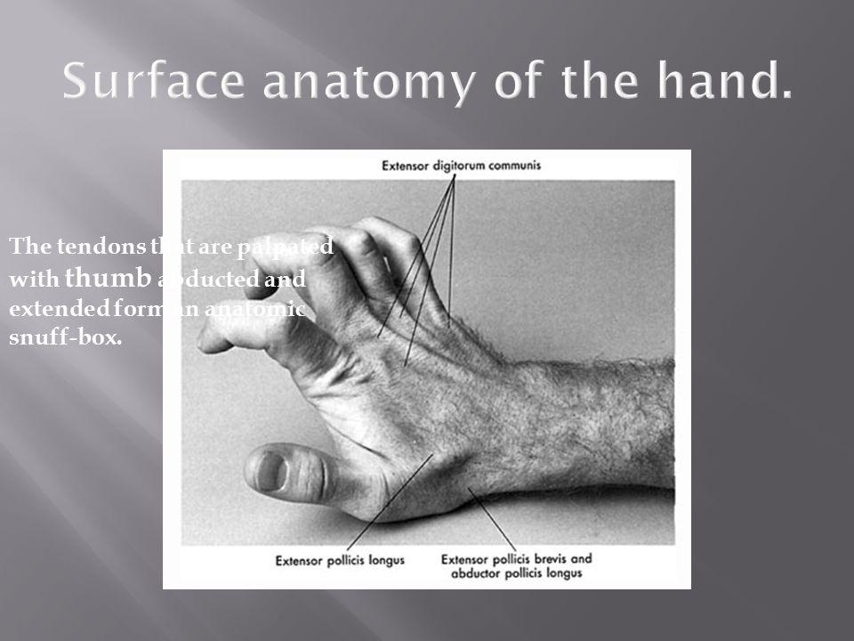 Hand surface anatomy