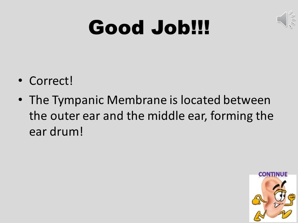 Good Job!!! Correct! The Tympanic Membrane is located between the outer ear and the middle ear, forming the ear drum!