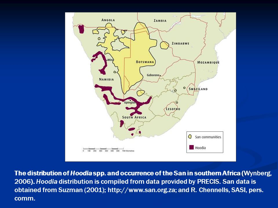 The distribution of Hoodia spp