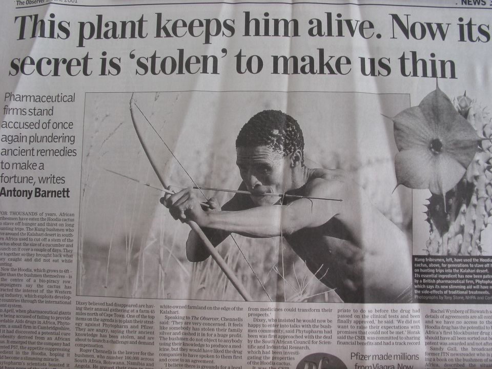 But in 2003, following the publicition of this article in the British Observer, the situation changed dramatically and an agreement was reached between the CSIR and the San to give the San a share of royalties from potential drug sales.