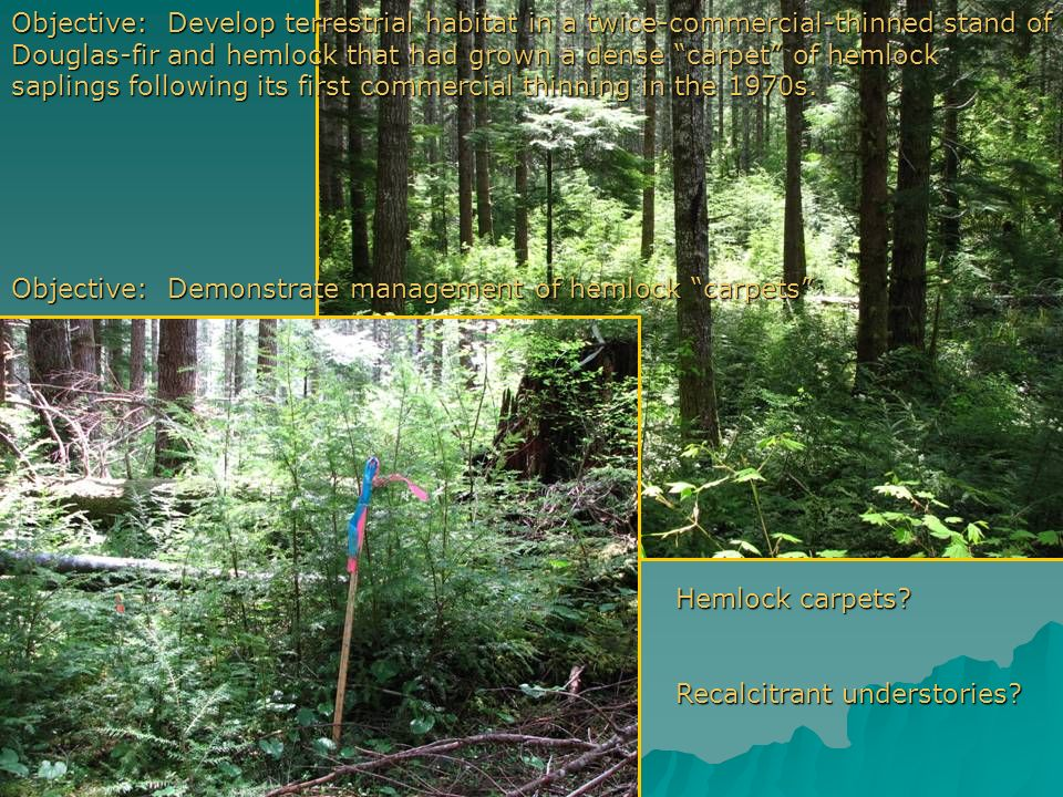 Objective: Develop terrestrial habitat in a twice-commercial-thinned stand of Douglas-fir and hemlock that had grown a dense carpet of hemlock saplings following its first commercial thinning in the 1970s.