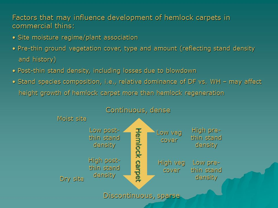 Factors that may influence development of hemlock carpets in commercial thins: