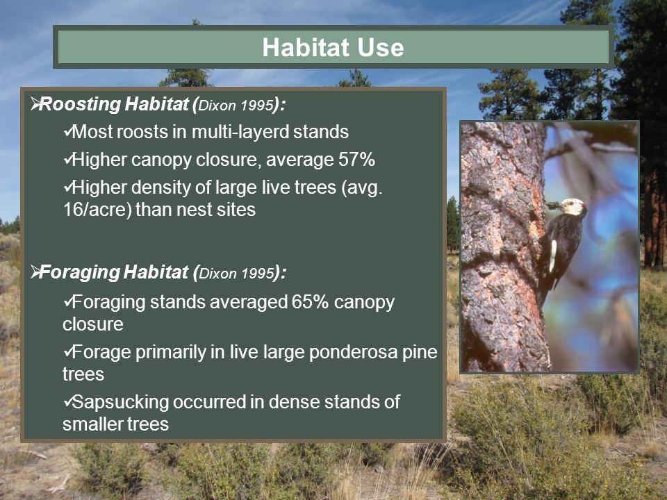 Habitat Use Roosting Habitat (Dixon 1995):