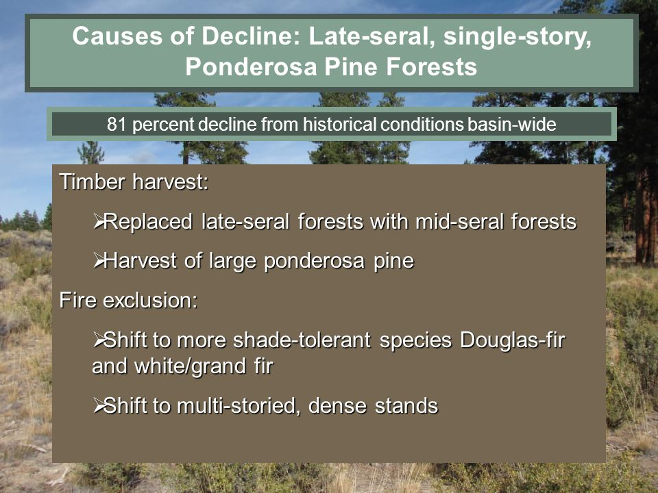Causes of Decline: Late-seral, single-story, Ponderosa Pine Forests