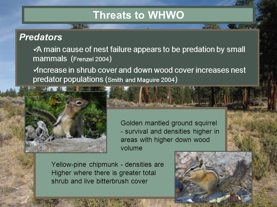 Threats to WHWO Predators