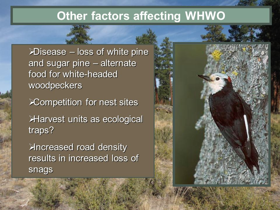 Other factors affecting WHWO