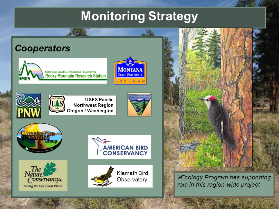 Monitoring Strategy Cooperators