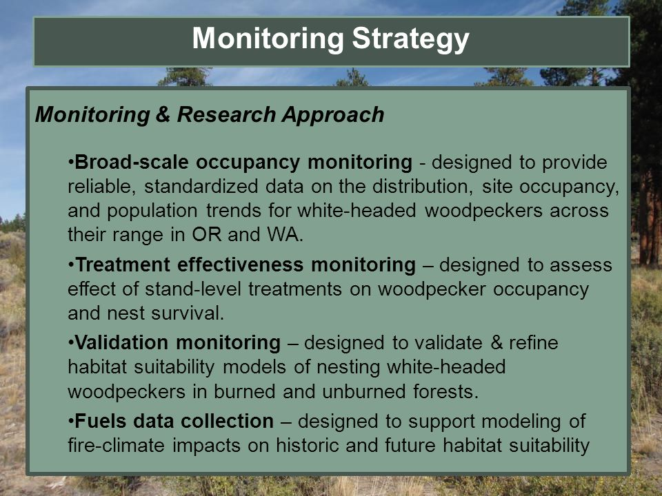 Monitoring Strategy Monitoring & Research Approach