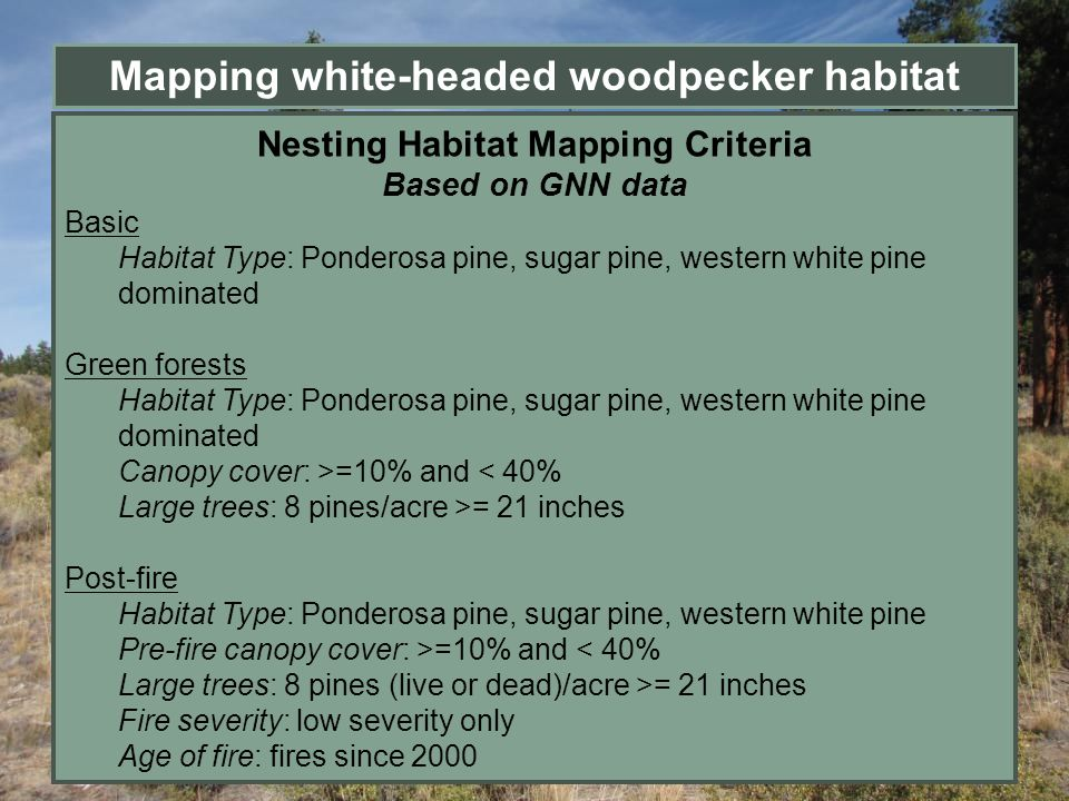 Mapping white-headed woodpecker habitat