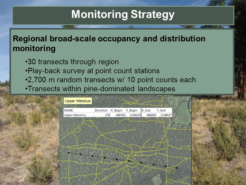 Monitoring Strategy Regional broad-scale occupancy and distribution monitoring. 30 transects through region.