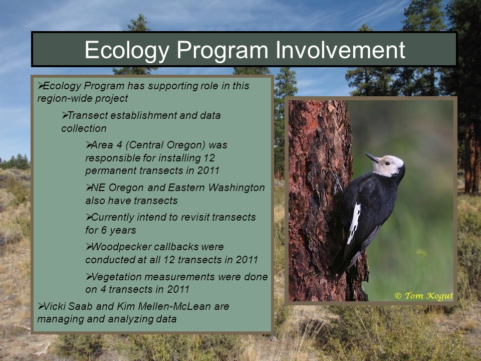 Ecology Program Involvement