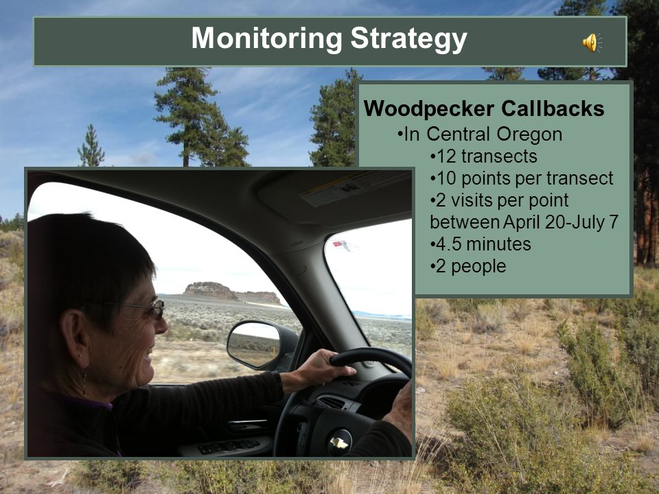 Monitoring Strategy Woodpecker Callbacks In Central Oregon