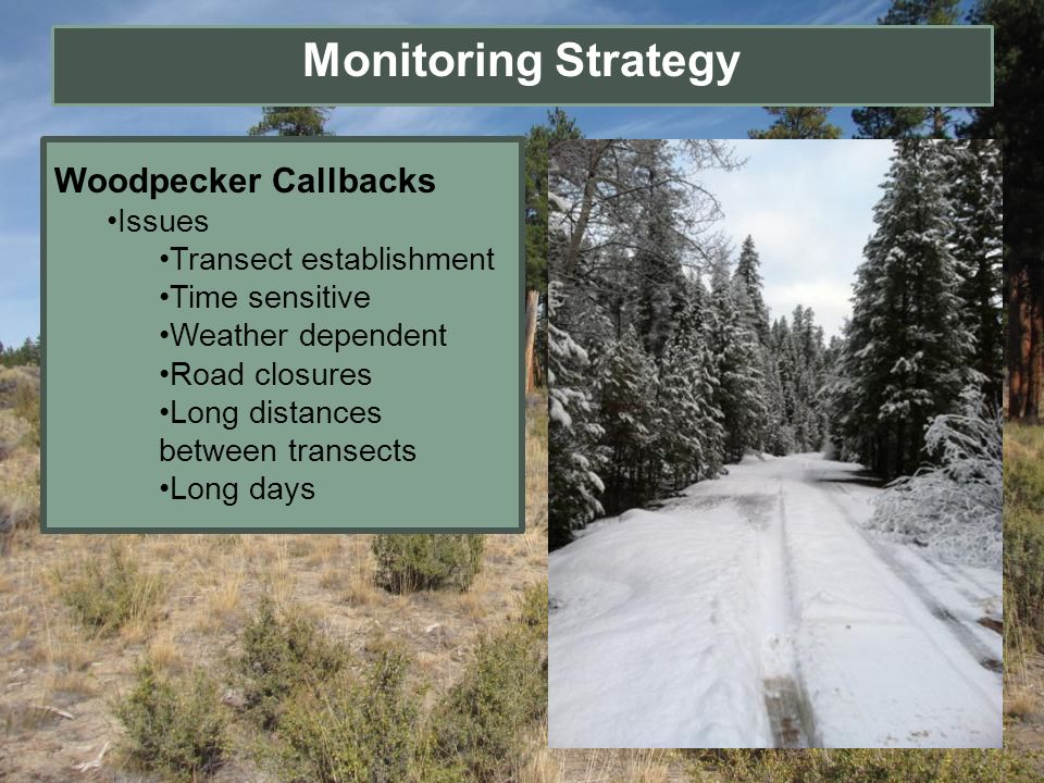 Monitoring Strategy Woodpecker Callbacks Issues Transect establishment