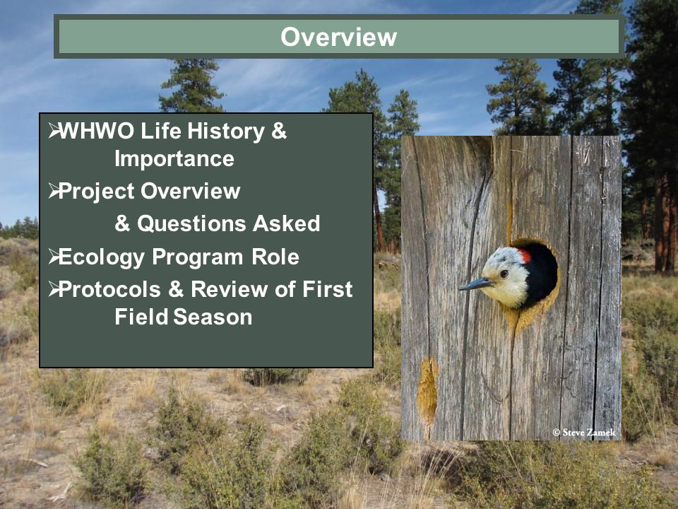 Overview WHWO Life History & Importance Project Overview