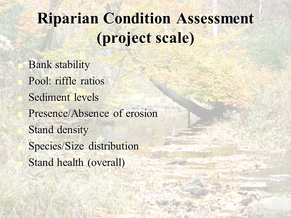 Riparian Condition Assessment (project scale)