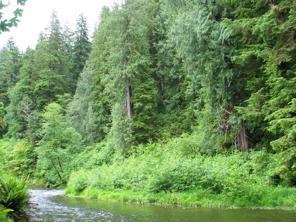 Audubon Sanctuary on Tenmile Creek