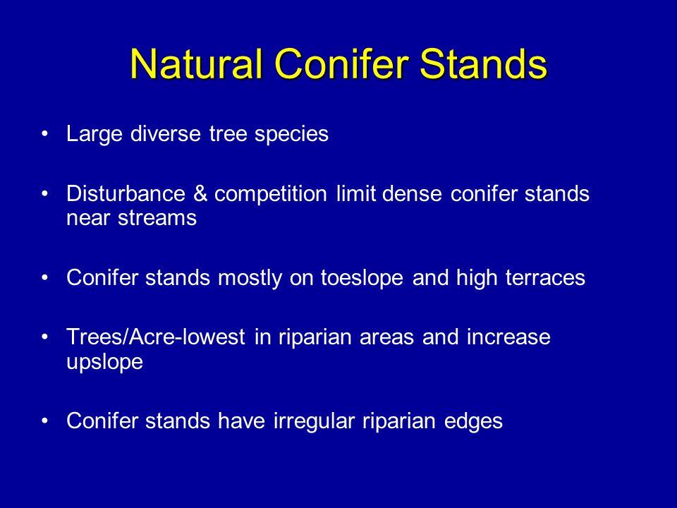Natural Conifer Stands