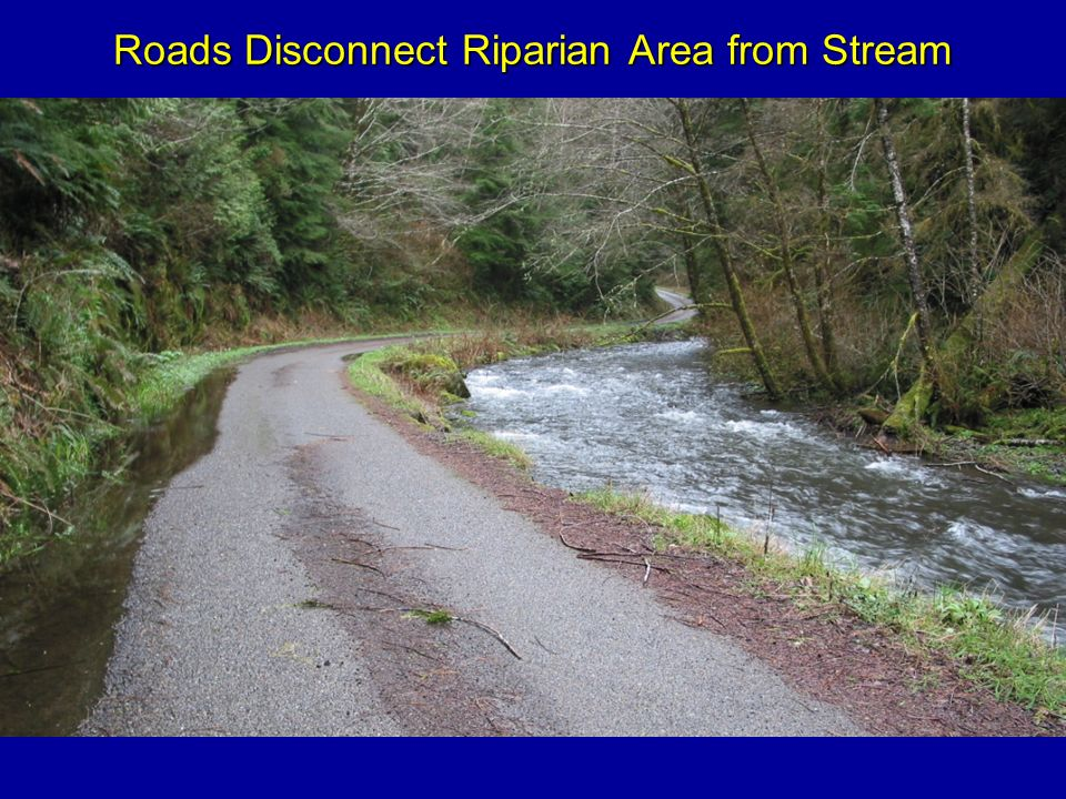 Roads Disconnect Riparian Area from Stream