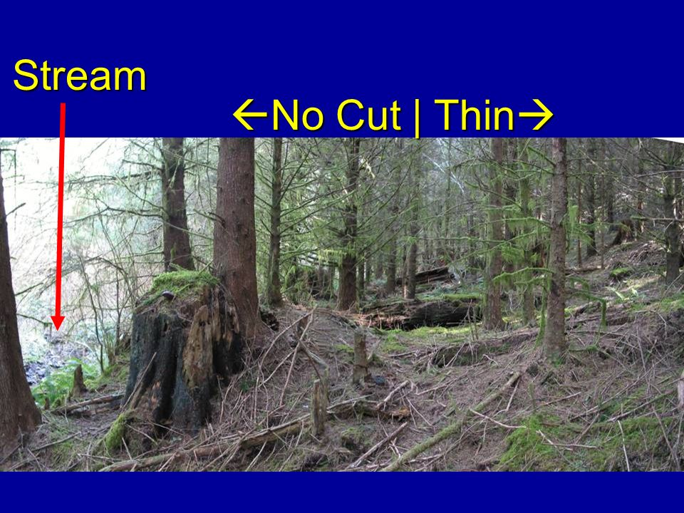 Stream No Cut | Thin