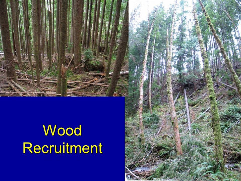 Wood Recruitment