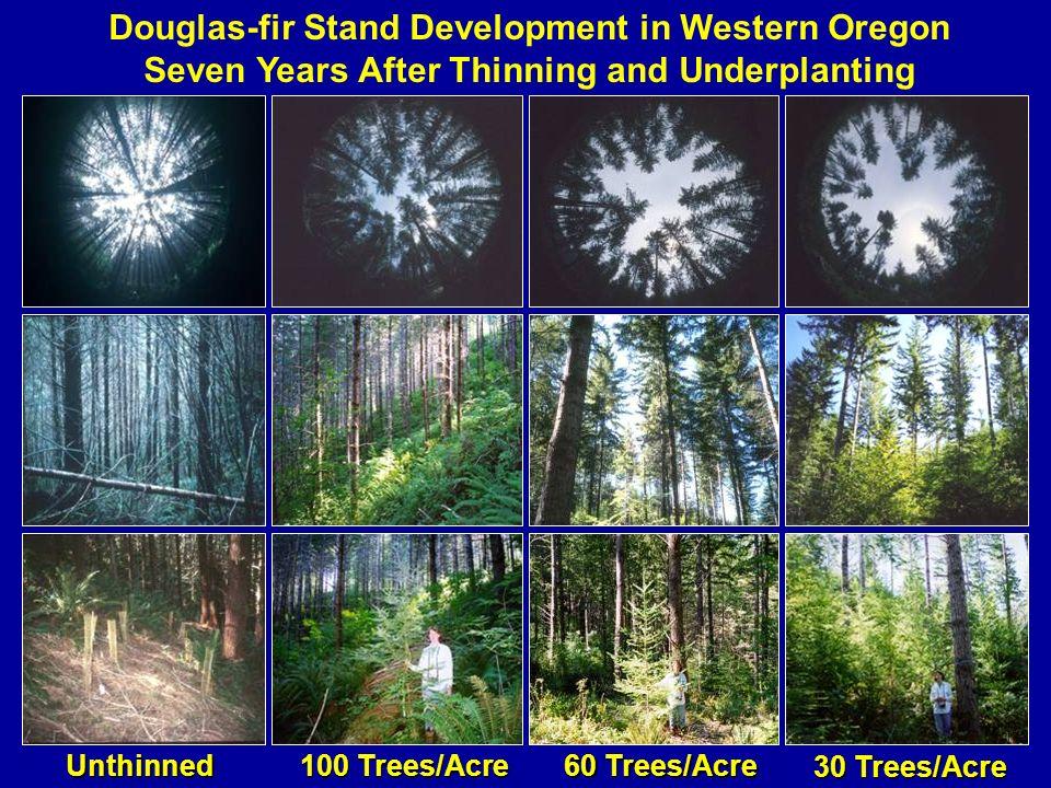Douglas-fir Stand Development in Western Oregon