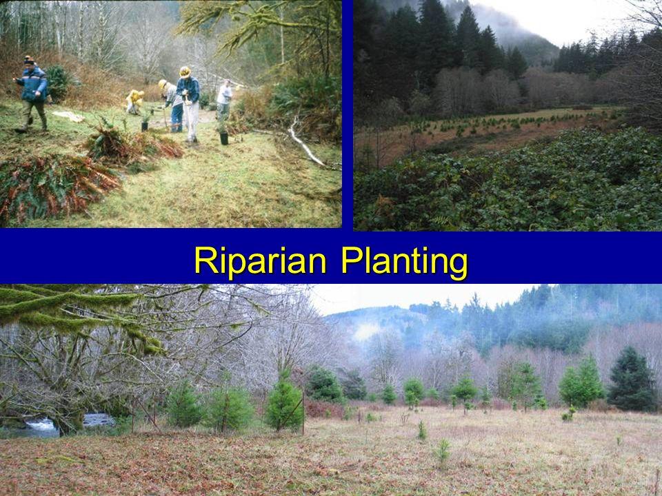 Riparian Planting