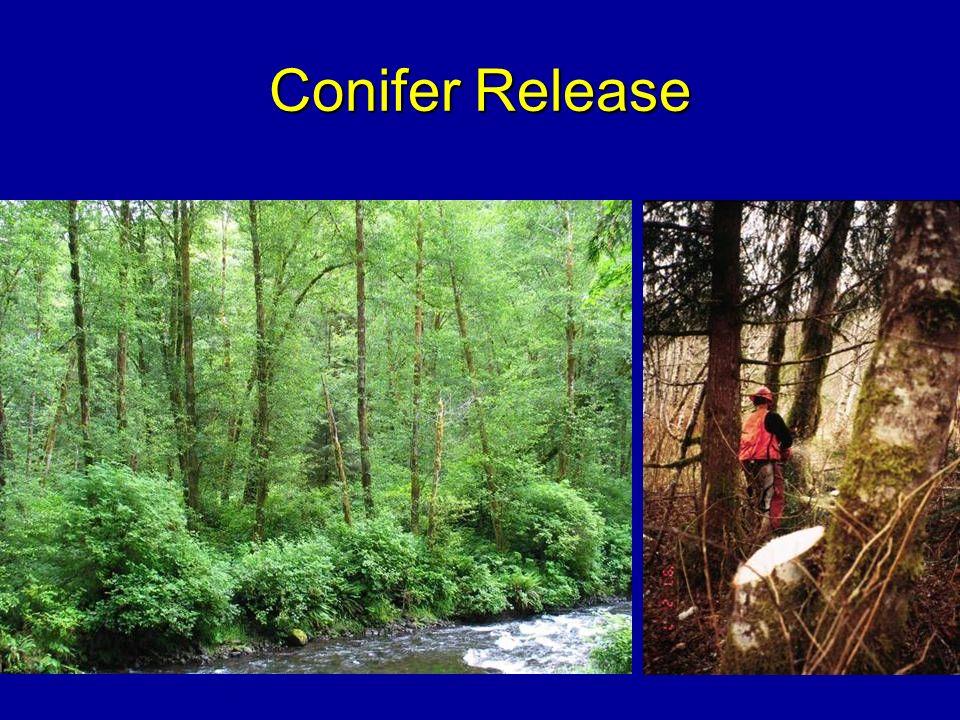 Conifer Release