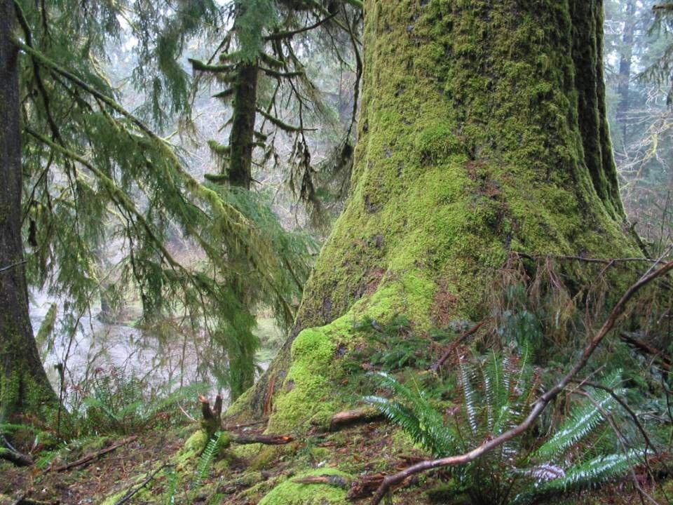 Yachats River near Beamer Creek