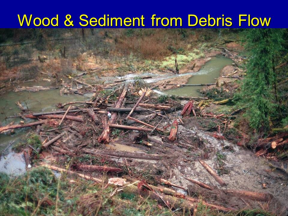 Wood & Sediment from Debris Flow