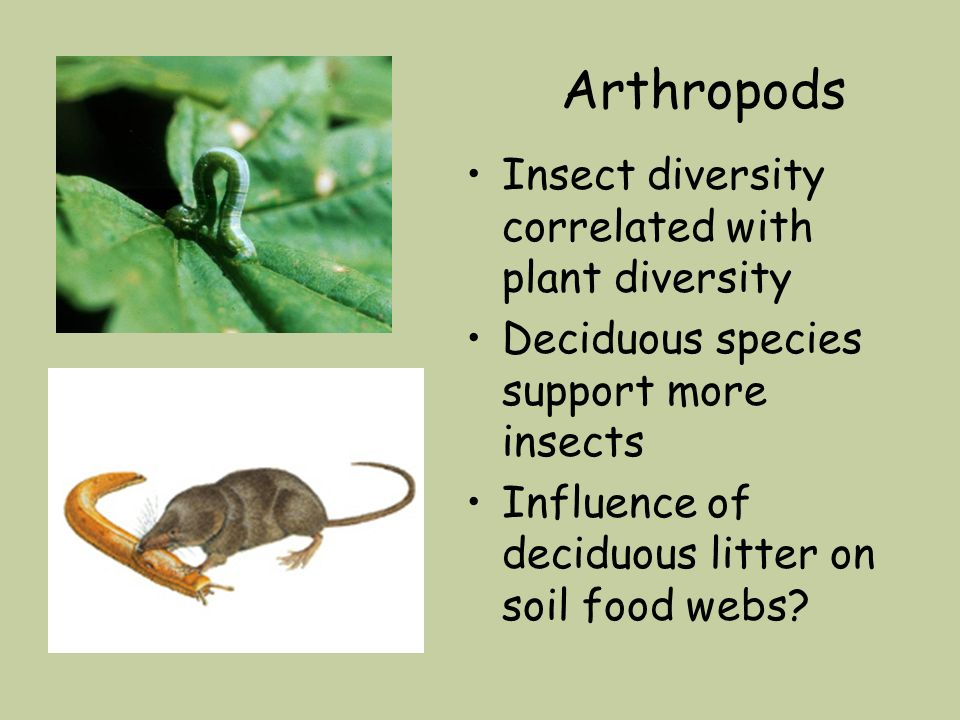 Arthropods Insect diversity correlated with plant diversity