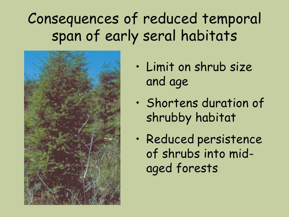 Consequences of reduced temporal span of early seral habitats