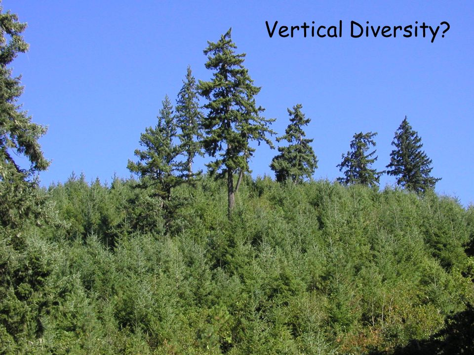 Vertical Diversity Structural diversity is important for maintaining wildlife diversity;