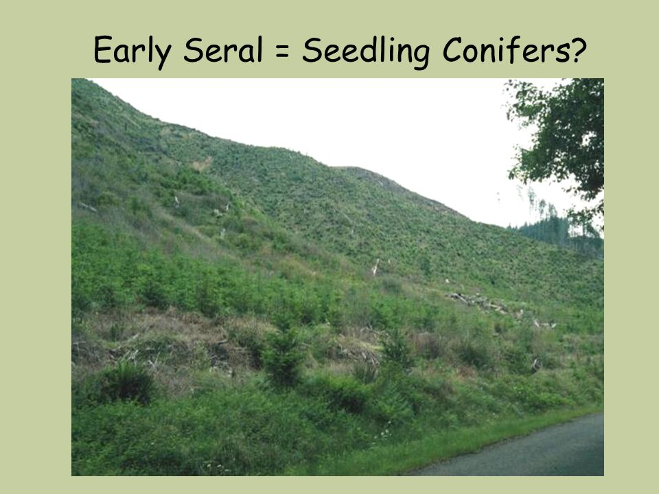 Early Seral = Seedling Conifers