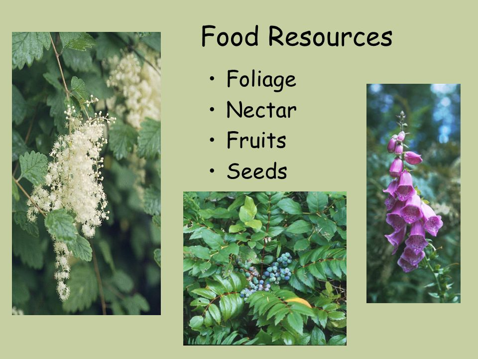 Food Resources Foliage Nectar Fruits Seeds