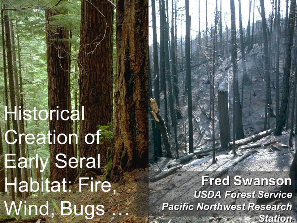 Historical Creation of Early Seral Habitat: Fire, Wind, Bugs …