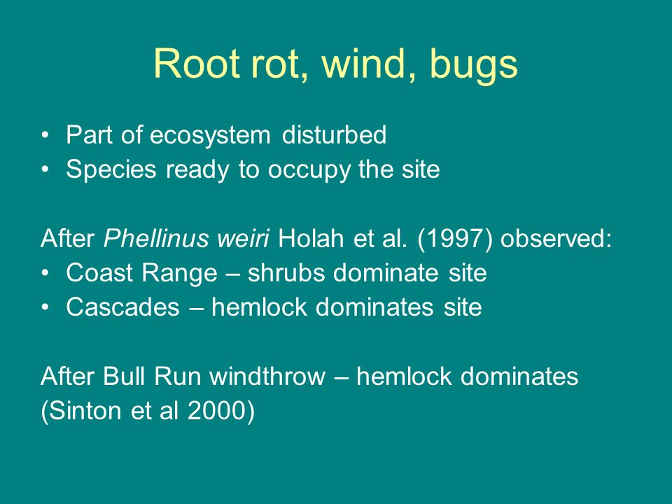 Root rot, wind, bugs Part of ecosystem disturbed