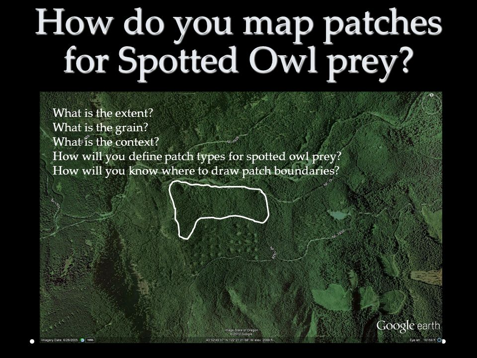 How do you map patches for Spotted Owl prey
